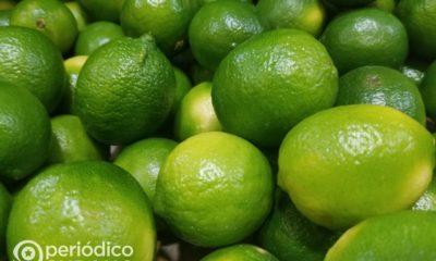 Los cubanos sin limones ven como desde Guantánamo el gobierno los exporta