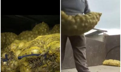 Cebollas siendo decomisadas
