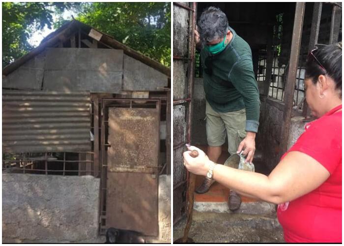 Activistas cubanos preparan un refugio para animales callejeros en Pinar del Río