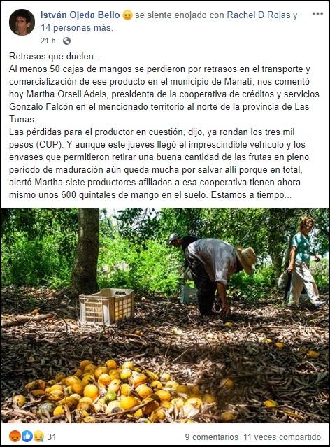 Las Tunas: Deficiencias en transporte causan pérdidas de miles de CUP en mangos