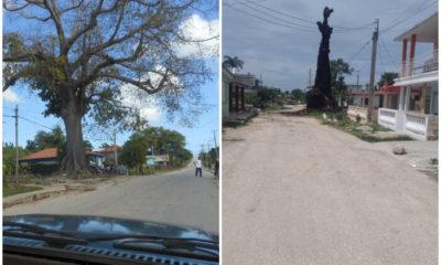 Simbólica ceiba se incendia en el poblado de Yaguajay