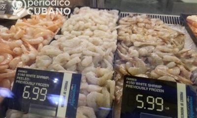Gobierno aumenta la producción de camarón en Camagüey, pero solo para exportación