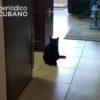 Gato provoca otro evento de rabia en la ciudad de Mayarí