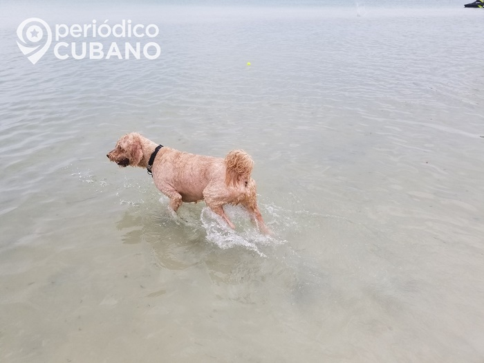 Gobierno cubano no acepta activistas en la elaboración de una ley contra el maltrato animal