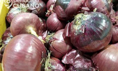 PNR decomisa 4 toneladas de cebolla presuntamente ilegal en Ciego de Ávila