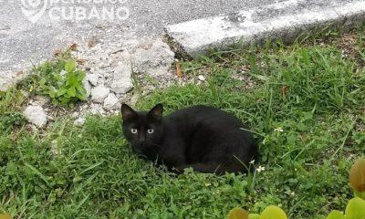 Gobierno cubano podría implementar ley de protección animal antes de que acabe el año
