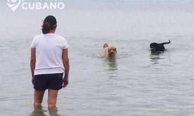 Activistas denuncian a falsos protectores de animales en La Habana