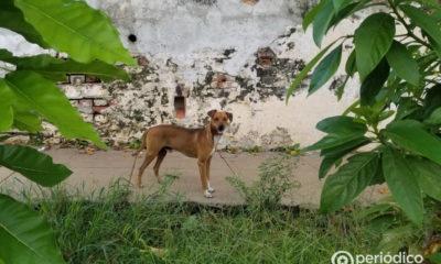 Doctor cubano afirma que los perros bien entrenados pueden detectar el coronavirus