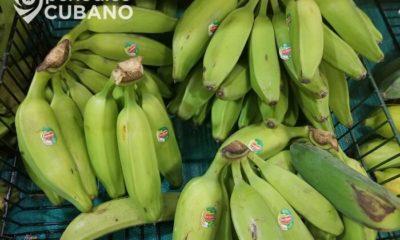 Medio oficialista recomienda a los cubanos comer cáscara de plátano ante la escasez de alimentos