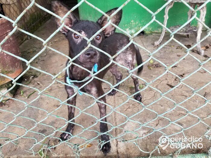 Zoonosis permite la entrada a sus instalaciones para la adopción de animales