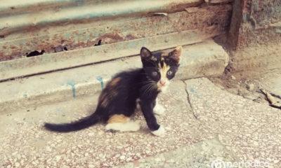 Activistas exigen al gobierno cubano publicar contenido de la Ley de Bienestar Animal