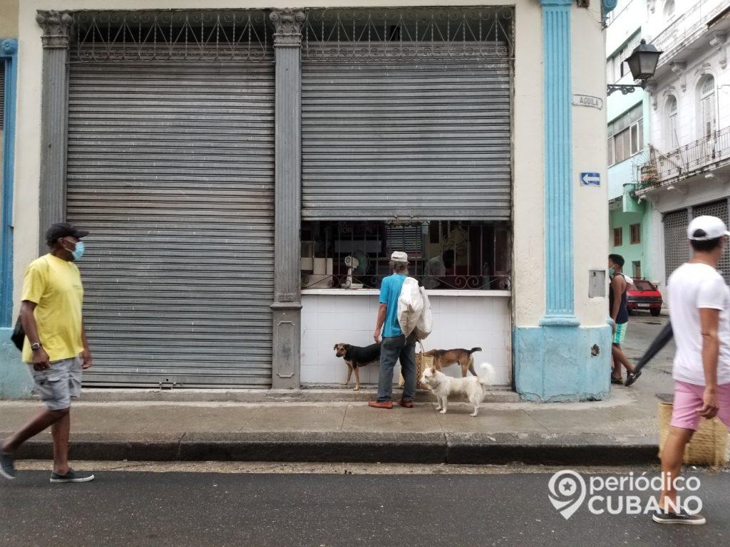 Cuba aprobaría una ley del bienestar animal en febrero, pero retrasa el nuevo Código de Familia