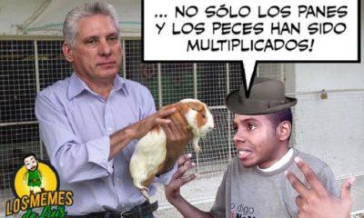 Llueven los memes sobre el curiel como alimento para los cubanos