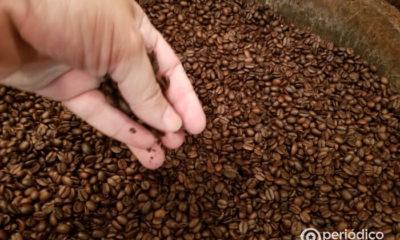 No hay café en la región cafetalera más importante de Cuba