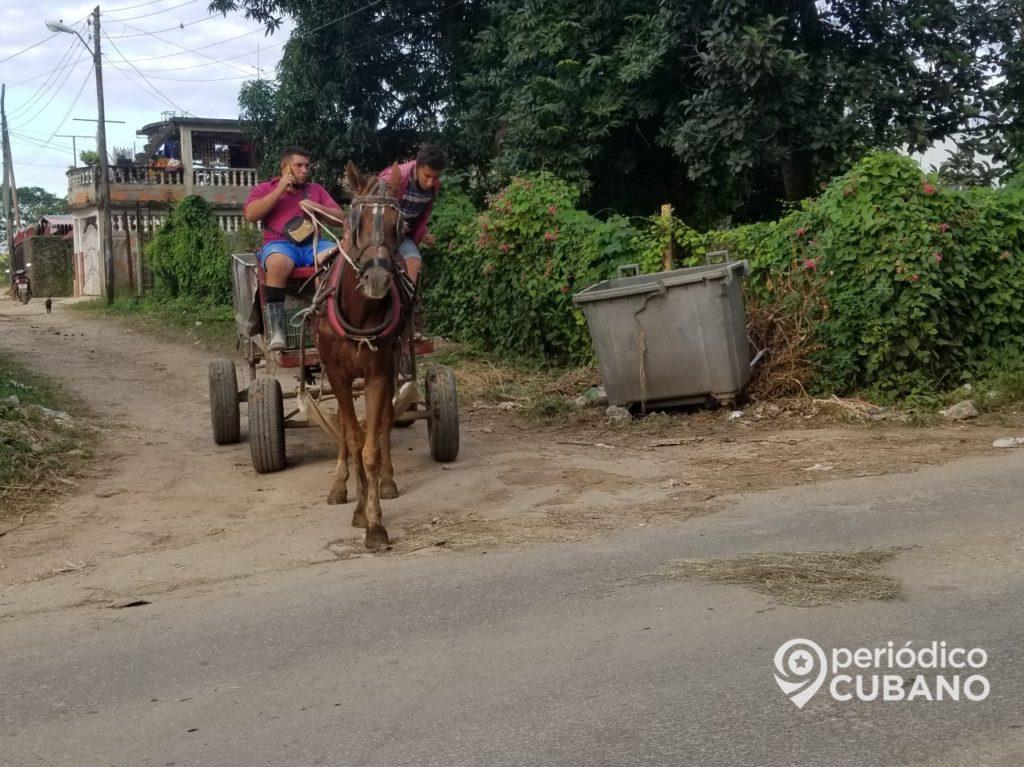 Autoridades de Nuevitas suspenden nuevas licencias para cocheros