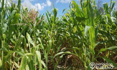 Empresarios agrícolas de EEUU piden a Biden que apoye el comercio con Cuba