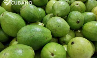 Implementan cambios en los precios de productos agrícolas en Acopio