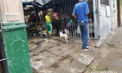 vendedores cubanos