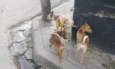 Publican en Gaceta Oficial el Decreto de Bienestar Animal