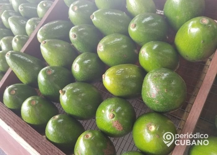 Exportaciones Cuba crisis de alimentos