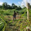 Incendios forestales hectáreas perdidas Cuba