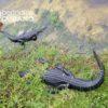 Maltrato animal: Encuentran a un cocodrilo de Florida amarrado con cinta adhesiva