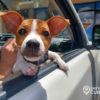 perrito mascota cachorro (2)