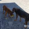 Cerrada la clínica veterinaria más importante de La Habana