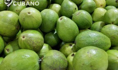 Prensa oficialista recomienda el té de hojas de guayaba como remedio para el COVID-19