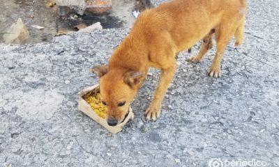 Resolución ministerial establece prohibiciones en la importación de productos veterinarios