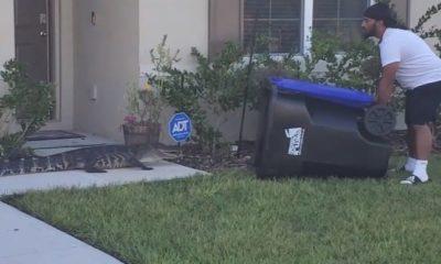 Veterano de Florida atrapó a un caimán con un bote de reciclaje