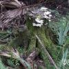 la flora cubana amenazada